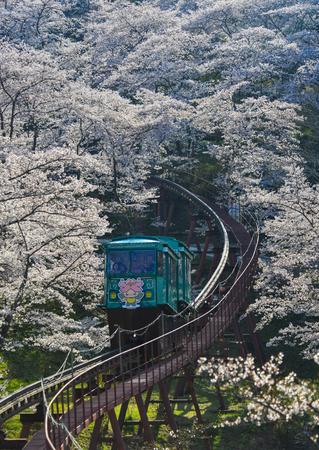 Fukushima, Japan - Apr 15, 2019. Slope car passing Sakura Tunnel at Funaoka Castle Ruin Park in Fukushima, Japan. Editorial