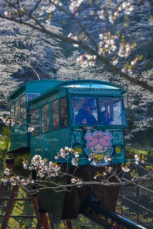 Fukushima, Japan - Apr 15, 2019. Slope car passing Sakura Tunnel at Funaoka Castle Ruin Park in Fukushima, Japan. Zdjęcie Seryjne - 122862350