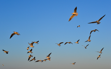 Seagulls flying in a blue sky background at spring time. Imagens - 122886402