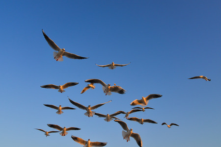Seagulls flying in a blue sky background at spring time. Imagens - 122886403