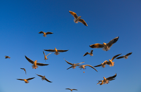 Seagulls flying in a blue sky background at spring time. Imagens - 122942512