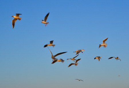 Seagulls flying in a blue sky background at spring time. Imagens