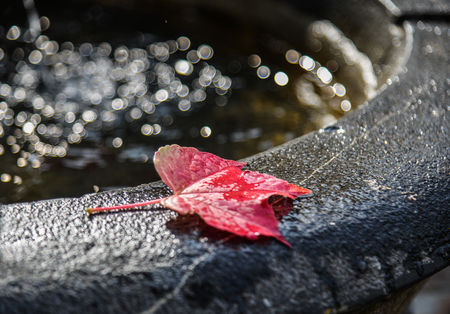 Autumn leaves on water sink with sun light. Nature background. 写真素材