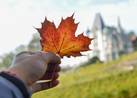 Red leaf of maple in male hand with ancient castle in Luzern, Switzerland.