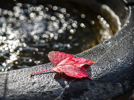 Autumn leaves on water sink with sun light. Nature background. 報道画像