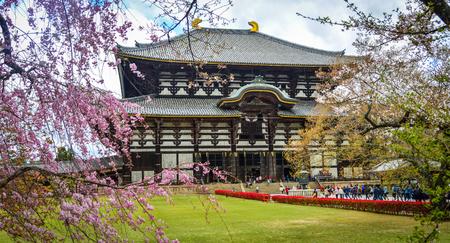 Nara, Japan - Apr 10, 2019. Ancient Buddhist temple Todai-ji with cherry blossom in Nara, Japan.