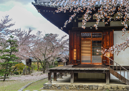 Nara, Japan - Apr 10, 2019. Cherry flowers with ancient building in Nara, Japan. Nara is the old capital of Japan, with a lot of heritages.