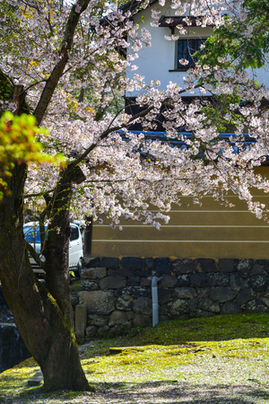 Japanese cherry blossoms at spring time in Kyoto, Japan. Standard-Bild - 122903786