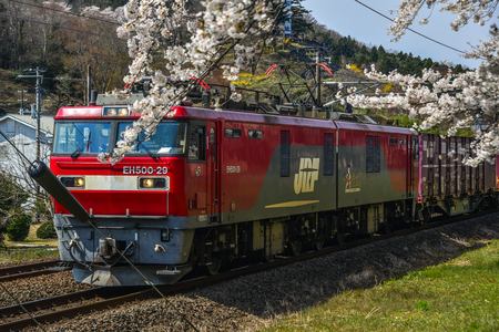 Miyagi, Japan - April 14, 2019. Landscape scenic view of Tohoku train with full bloom of sakura (cherry blossom). Zdjęcie Seryjne - 122862950
