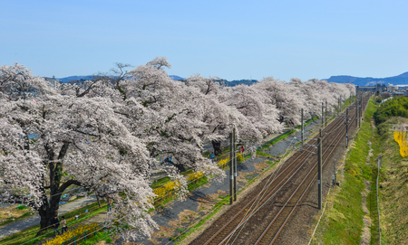 Miyagi, Japan - April 14, 2019. Landscape scenic view  of sakura (cherry blossom) with railway track and Zao Mountain Range background.