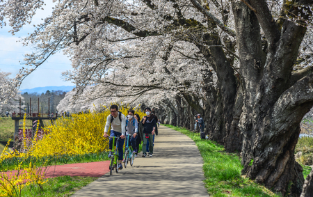 Miyagi, Japan - Apr 14, 2019. People enjoying at the cherry blossom park near Shiroishi River at sunny day in Miyagi, Japan. Editorial