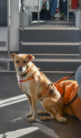 A cute dog sitting on the train in sunny day. Zdjęcie Seryjne
