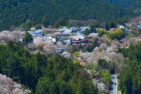 Yoshino Mountain covered by full blossom cherry trees at sunny day in Nara, Japan.