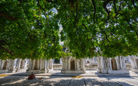 Huge tree at the garden of Buddhist temple in Mandalay, Myanmar.