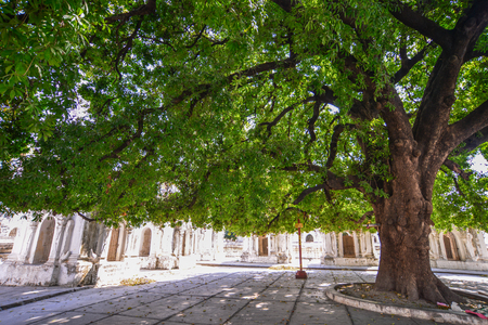 Huge tree at the garden of Buddhist temple in Mandalay, Myanmar. Stockfoto - 123219049