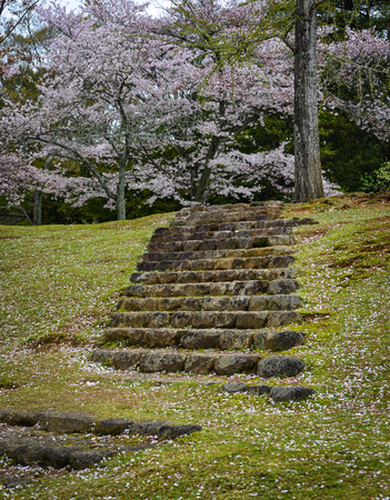 Cherry trees and flowers in Nara Park, Japan. Nara is a very popular spot for Hanami during cherry blossom season.