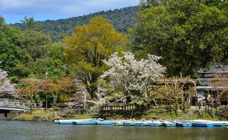 Nara, Japan - Apr 11, 2019. Cherry blossom at small pier at Nara Park, Japan. Nara is a very popular spot for Hanami during cherry blossom season. Editorial