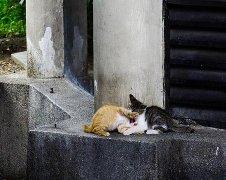 Wild cat on street in downtown of Kuala Lumpur, Malaysia.
