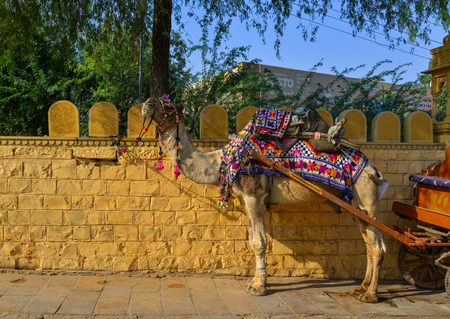 Jaisalmer, India - Nov 9, 2017. Camel taxi in the streets of Jaisalmer, India. Jaisalmer is on the westernmost frontier of India.