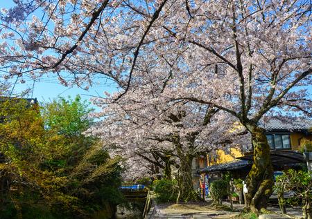 Cherry blossom (sakura) on Philosopher Walk in Kyoto, Japan. Archivio Fotografico - 125229071