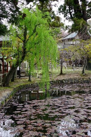 Small lake with marsh plants and lilies in Kyoto, Japan.