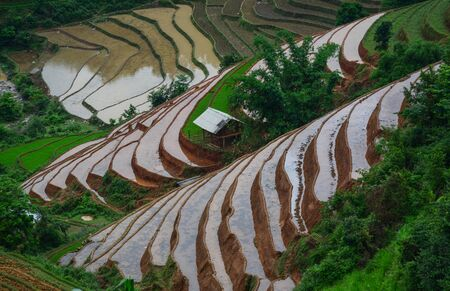 Terraced rice field in Sapa, Vietnam. Sapa is a beautiful, mountainous town in northern Vietnam along the border with China.