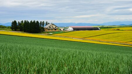 Beautiful rural scenery at summer day in Furano Township, Hokkaido, Japan. Stockfoto
