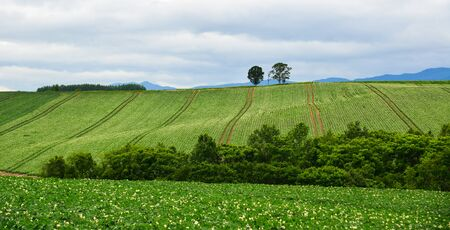 Beautiful rural scenery at summer day in Furano Township, Hokkaido, Japan. 写真素材