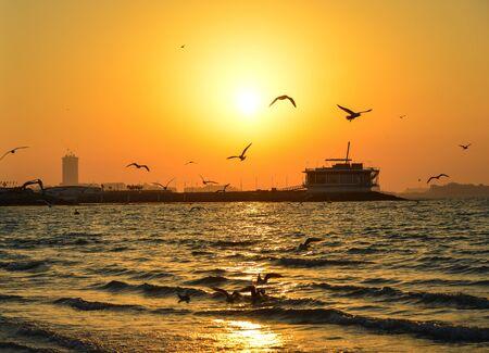 Sunset on the sand beach with many birds in Dubai, UAE. Zdjęcie Seryjne