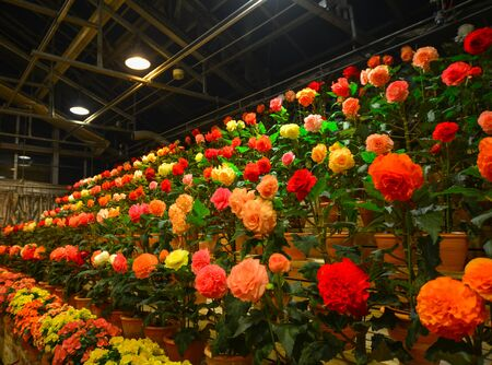 Flowers blooming in greenhouse at night in Nagoya, Japan.
