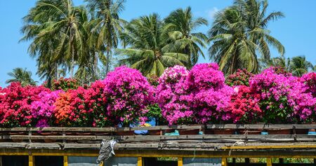 Flower field at spring time in Mekong Delta, Vietnam. Stok Fotoğraf