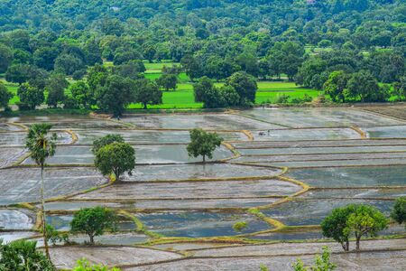 Rice field at the flood season in An Giang, Mekong Delta, Vietnam.