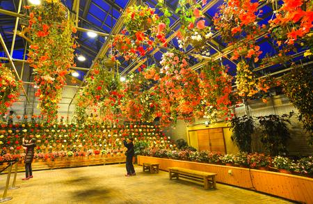 Nagoya, Japan - Mar 16, 2018. Flowers blooming in greenhouse of Nabana no Sato Park at night in Nagoya, Japan.
