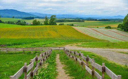 Beautiful rural scenery at summer day in Furano Township, Hokkaido, Japan. Reklamní fotografie