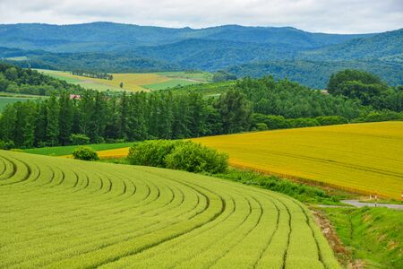 Beautiful rural scenery at summer day in Furano Township, Hokkaido, Japan. Imagens