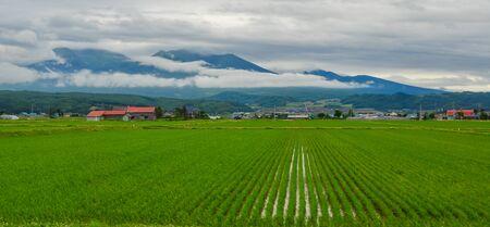 Beautiful rice field in Akita, Japan. Akita rice is so special and famous in Japan. Stock fotó