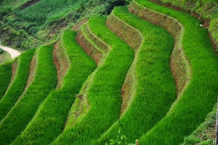 Terraced rice field in Mu Cang Chai, Northwest Vietnam. Terraced rice fields in Vietnam are among the most beautiful agricultural wonders in the world.