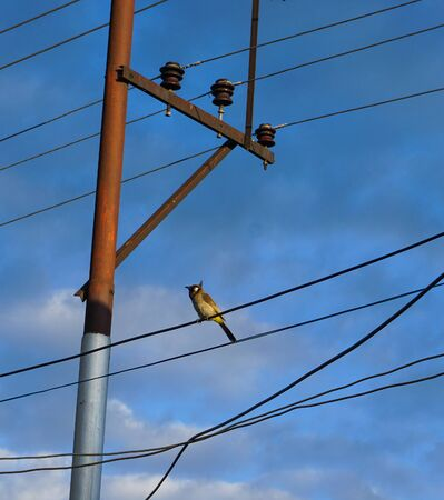 A bird sitting on electric wire under blue sky in summer day. Stock fotó