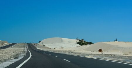 Highway at summer day in Phan Thiet, Vietnam. The total length of the Vietnam road system is about 222,179 km. Imagens