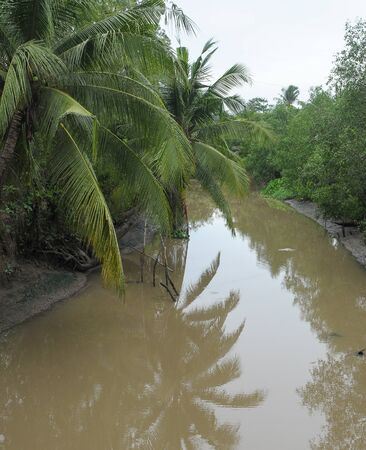 Small canal with many palm trees in Mekong Delta, Southern Vietnam.