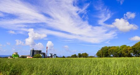 Sugar cane growing in a field with the refinery in the background on Mauritius Island.