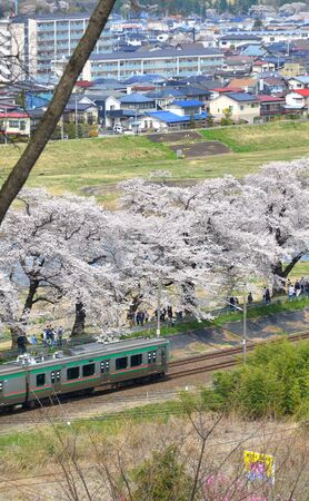 Miyagi, Japan - April 14, 2019. Scenic view of Tohoku train with full bloom of sakura. The act of hanami (cherry blossom) is an ancient tradition that represents appreciating the fleeting nature of life.