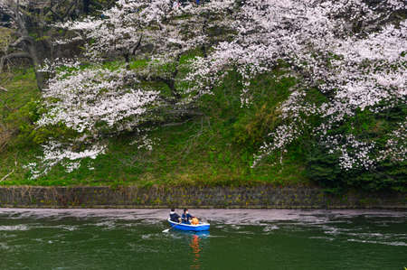 Tokyo, Japan - Apr 7, 2019. People enjoy cherry blossoms from rowing boats at Chidorigafuchi Park in Tokyo, Japan. 新聞圖片