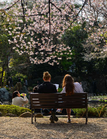Tokyo, Japan - Apr 7, 2019. People enjoying cherry blossom (hanami) at the park. Hanami festivals drive billions into the economy as tourists flock to see the beautiful blossoms.