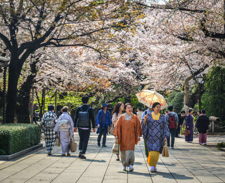Tokyo, Japan - Apr 7, 2019. Women in kimono dress enjoying cherry blossom (hanami). Hanami festivals drive billions into the economy as tourists flock to see the beautiful blossoms. 新闻类图片