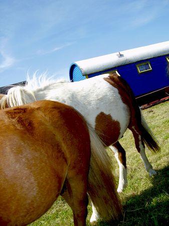 backs: Horses backs Stock Photo