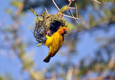 nesting: Nesting