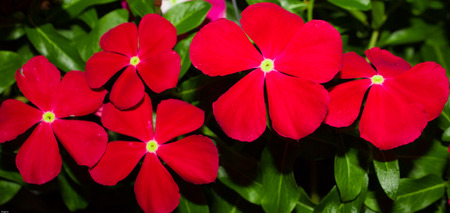 Red flower by night photo