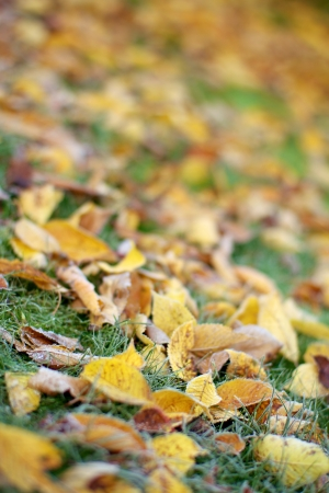 An angled shot of colourful yellow and gold fallen leaves on grass Stock Photo