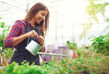Young female nursery owner and entrepreneur watering potted plants in her greenhouse as she propagates them for sale in the shop